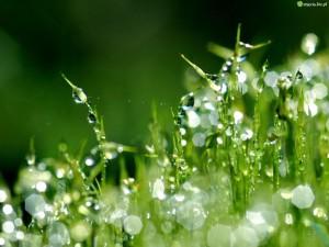krople-trawa-wody